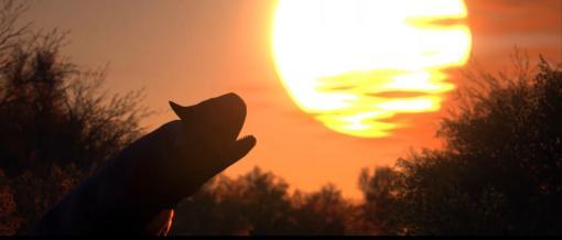 恐竜サバイバルホラー『Instinction』新映像公開。『ディノクライシス』の精神的続編を目指す、息の詰まる生存活劇