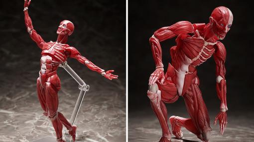 """理科室の""""人体模型""""がフル可動のアクションフィギュア""""figma""""になって登場。各所にクリアパーツを使用したリアルな質感で人体の構造を細部まで再現"""