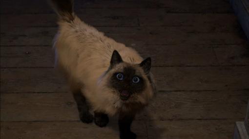 スクウェア・エニックスの新作『FORSPOKEN』の猫をめぐる問い合わせが殺到。異世界で冒険する飼い主不在中の安否を公式Twitterが回答