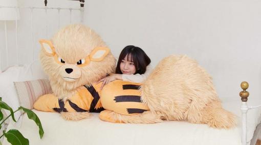 ポケモン「ウインディ」が幅150cmのビッグサイズ「添い寝ぬいぐるみ」として登場、受注受付を開始。価格は4万9500円